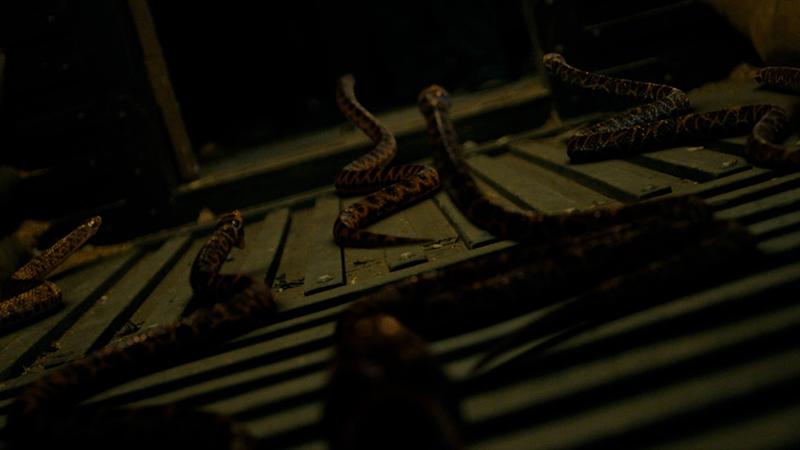 蛇王 キング・オブ・スネーク